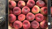 Предлагаем оптовые поставки плоского персика Москва