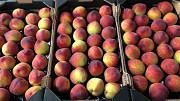 Предлагаем оптовые поставки свежих персиков Москва