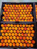 Предлагаем оптовые поставки абрикосов Москва