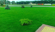 Газон рулонный и посевной Медовка и посадка газона в Медовке Воронеж