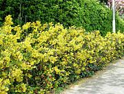 Медовка посадка растений, высадка кустов и деревьев в Медовке и области Воронеж