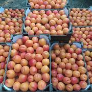 Продаем абрикосы Санкт-Петербург
