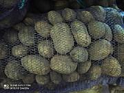 Картофель оптом. Урожай 2021. Беларусь Москва