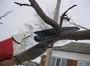 Обрезка плодовых деревьев Масловка и опрыскивание деревьев в Масловке в Воронеже и области Масловка