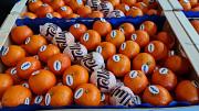 Предлагаем оптовые поставки мандаринов Москва