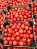 Предлагаем оптовые поставки томатов разных сортов Москва