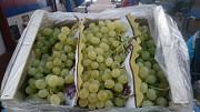 Предлагаем оптовые поставки винограда Москва